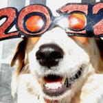 Goals: 2012